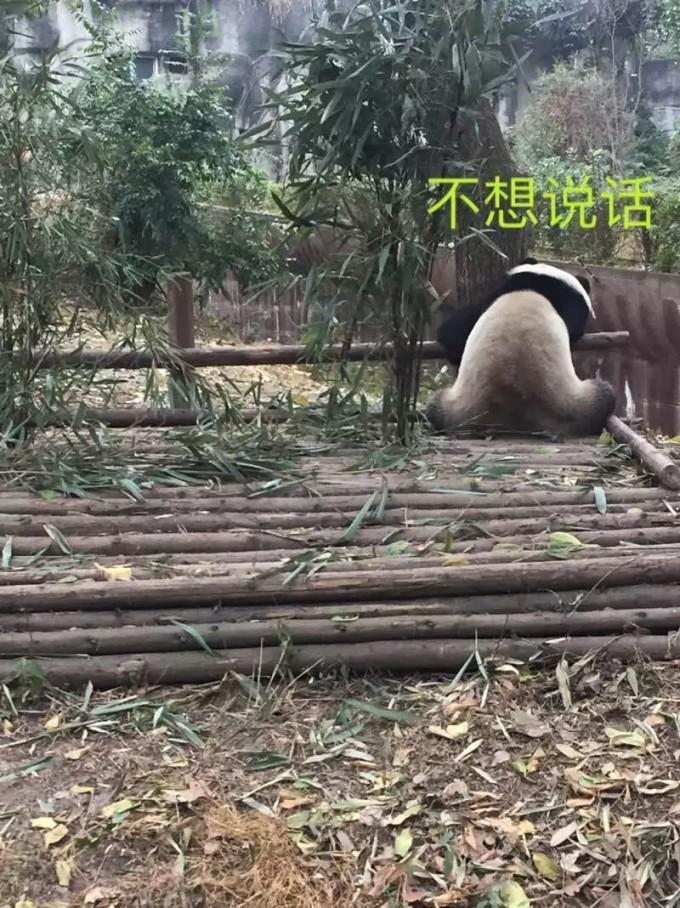 园区内,常年养着大熊猫,小熊猫,黑颈鹤,白鹤,孔雀等动物.