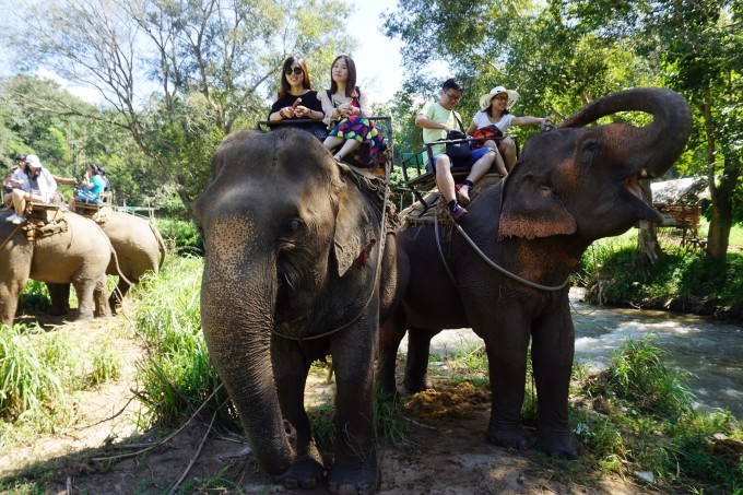 壁纸 大象 动物 680_453