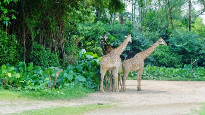 长隆野生动物园,广州长隆旅游度假区旅游攻略 - 马蜂窝