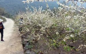 【阳山图片】春节,来一次令人心动的花事