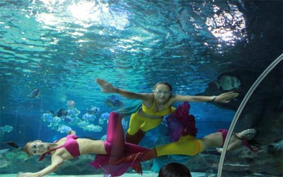 北京太平洋海底世界博物馆景点门票