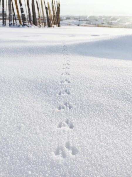 在半山腰的时候,能看到下面的小村庄,雪地上留了不知名动物的脚印