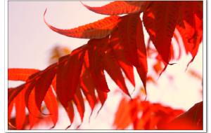 【淄博图片】醉爱红叶