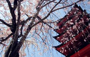 【广岛市图片】一人游日本 之广岛・宫岛篇