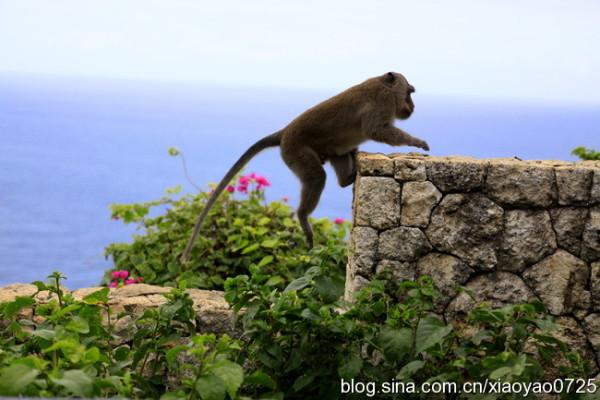 巴厘岛 游记  结果第三天起床,我刚一拉开窗帘,就发现一只猴子骑在