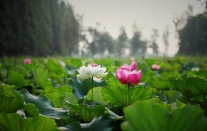 【芜湖图片】芜湖陶辛水韵 摄者的消夏天堂【高清图文已完结】