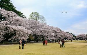 【日本图片】世界那么大之日本 美景の旅东京、横滨、京都、奈良、大阪