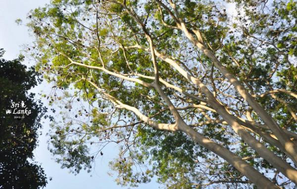 ,蜥蜴,鸟阿,乌龟也来抽热闹.在一棵断树入河的地方拍了一个小时图片