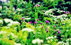 【锡林郭勒图片】【看草原·花正艳】艳遇锡林郭勒—释放自己的完美夏天