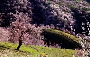 【新源图片】在那杏花盛开的地方---记伊犁杏花沟