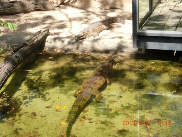 <水里的小乌龟好悠闲内~>   <这么小一棵树上居然有3只考拉,好可爱图片