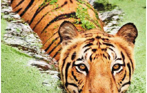 【孟加拉国图片】算不上自由行的孟加拉寻虎记