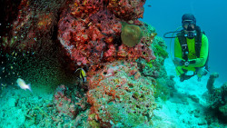 普吉岛娱乐-Dive Asia