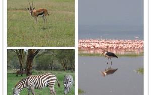 【内罗毕图片】#花样游记大赛#千年等一回---肯尼亚之旅纪实