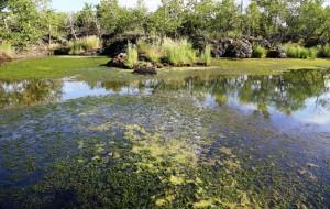 【五大连池图片】我的中国梦之旅-黑河、五大连池4日半自由行而②五大连池景区