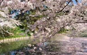 【青森县图片】2015年4月青森县—赏樱花