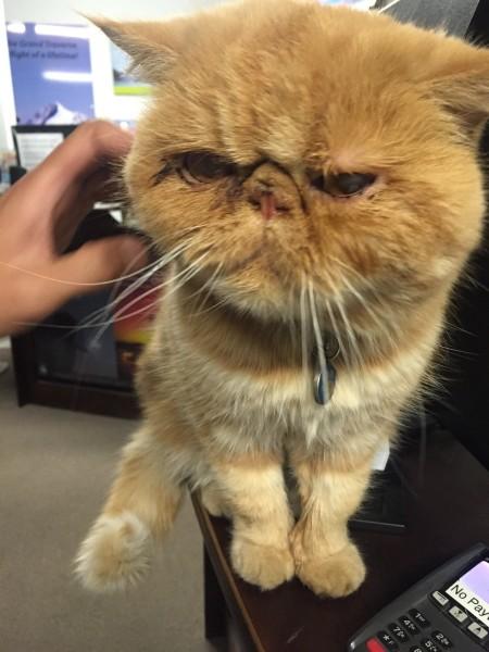 办入住,老板娘养的加菲猫,一会儿就窜到收银台上,老公说在国内店里摆