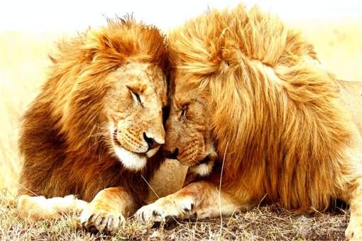 西锁岛 西棕榈滩 罗德岱堡 雄狮王国野生动物园5日游 约会美国天涯海角