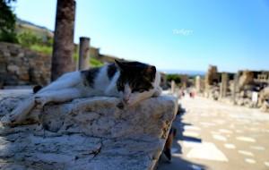 【安塔利亚图片】土耳其惊艳了我一整个夏天~~毕业旅,15天超详细攻略(热气球、滑翔伞、内附电子签操作步骤,干货)