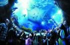 香港 海洋公园玩乐套票(门票+香港市区去程巴士)