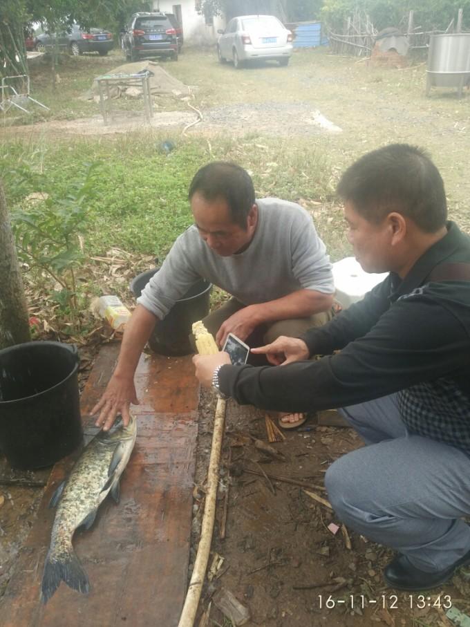 中国北方沿海蛇类