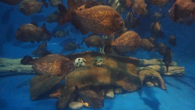 壁纸 动物 龟 海底 海底世界 海洋馆 水族馆 680_385