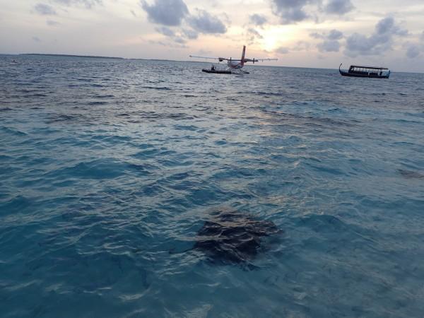 美好回忆之 神仙珊瑚岛