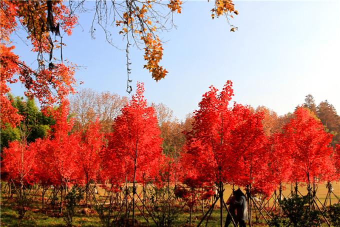 梅花树风景壁纸