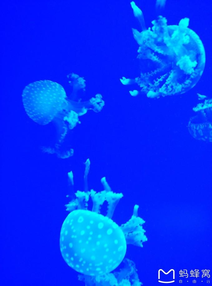 罗源湾海底世界