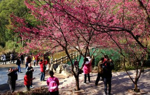 【福州图片】福州春来早    鲜花开满城