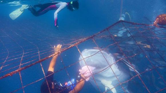 壁纸 动物 海底 海底世界 海洋馆 水族馆 鱼 鱼类 580_326