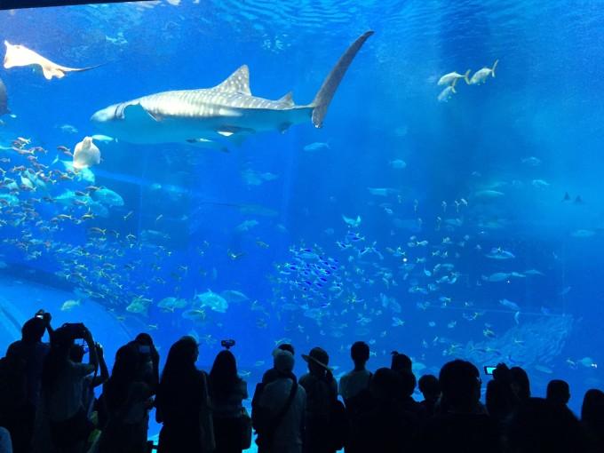 我小时候也去过海族馆,印象都不深刻了,这次倒是让我很震撼,好像小