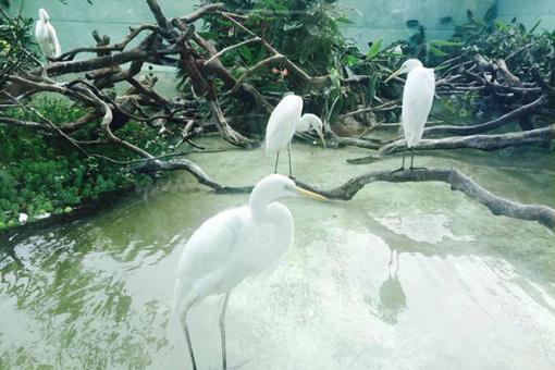 【动物乐园】长隆野生动物园+欢乐世界+飞鸟乐园3