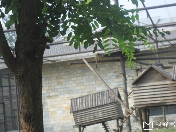 看看我们的朋友——石家庄动物园