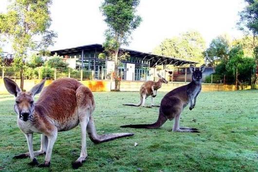 野生公园逗人喜爱的野生动植物,可以看到考拉还可以亲手喂食袋鼠噢.