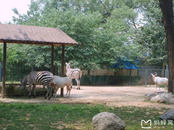 济南 游记         济南动物园原名金牛公园