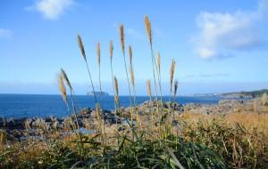 【西归浦图片】【M.Y】冬日纪念--my's济州岛匆匆之行