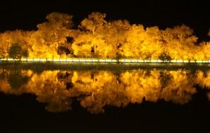 【包头图片】西部环游6600公里之三:巴彦淖尔到额济纳630公里的S312公路,夜幕下的胡杨林