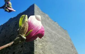 【邯郸图片】春天里,鲜花簇拥的邯郸古城