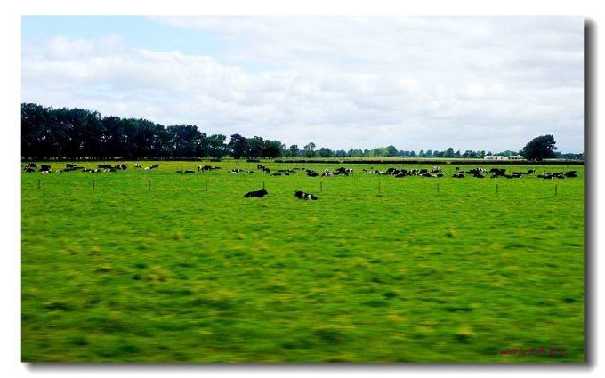广袤的森林和牧场使新西兰成为名副其实的绿色王国.