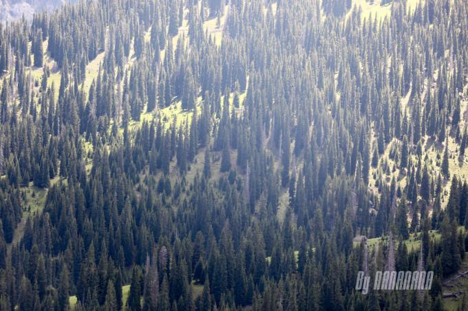 逸   特别有暮光森林的感觉,不过今天走的是阳光灿烂风格,不适合暮