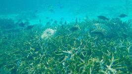 迷人的浮潜A级岛的样子