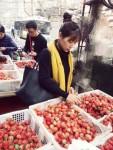 草莓的天下